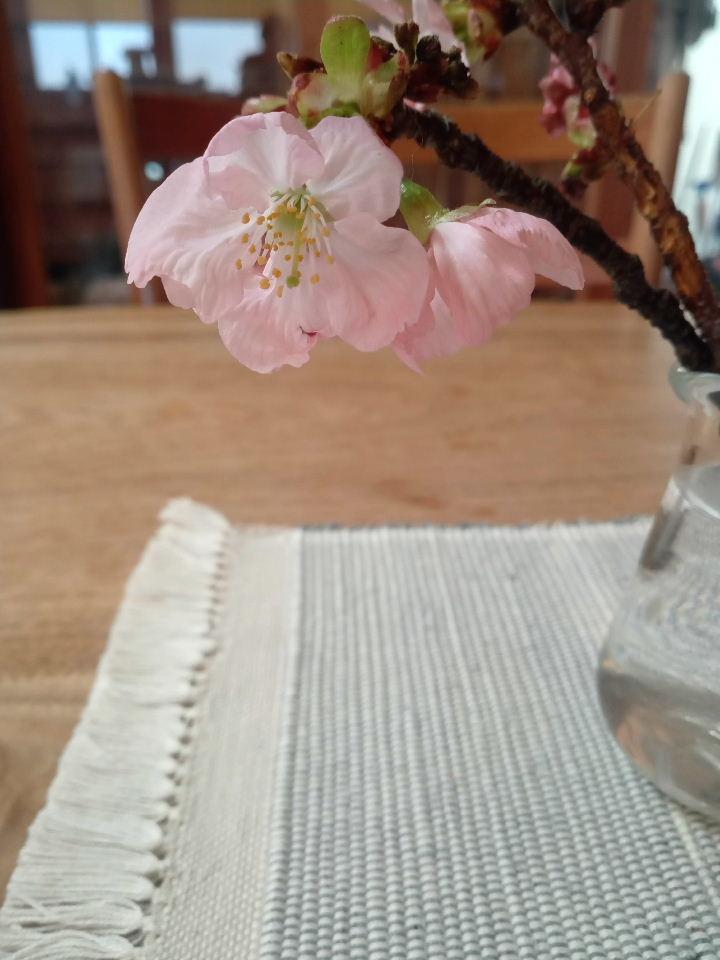 春です。桜の色を染めました。  家で草木染め。