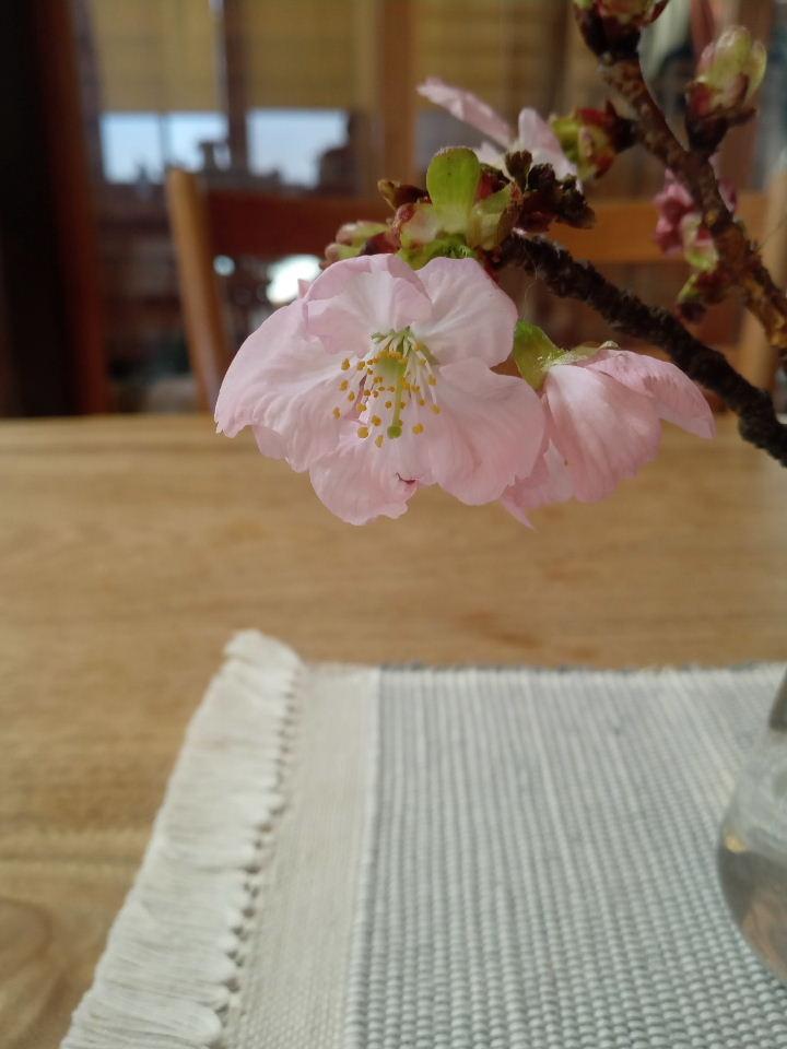 桜色なのに、なんでいろいろな色があるの?ハンサムなスタイルのマフラー、色の秘密。