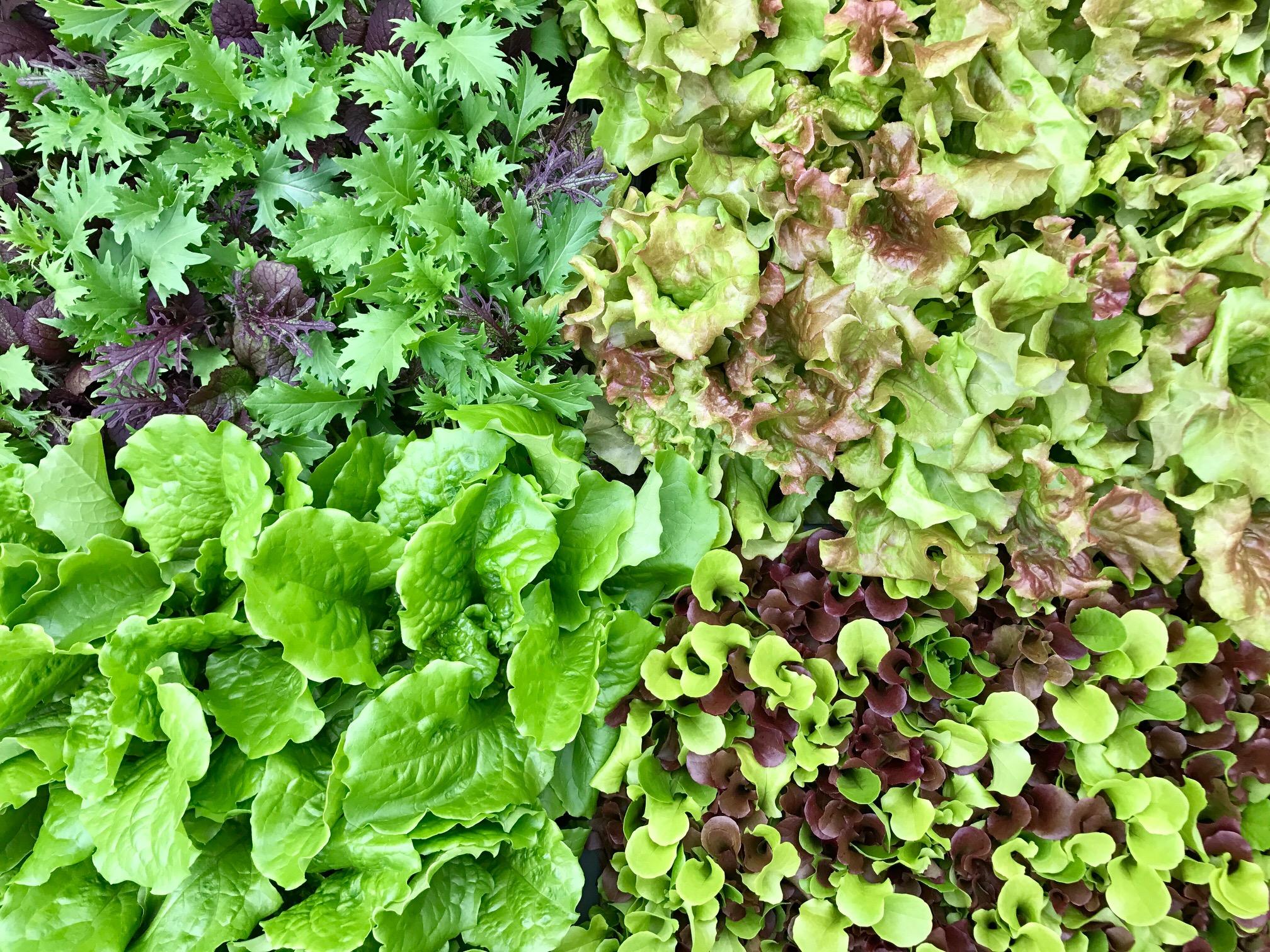 大人気のポット野菜、ビオラ、ストック、観葉植物大量入荷です!