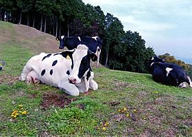 【コラム】 #10 山地牛乳