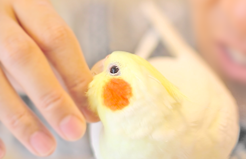 5年目を迎えた傷ついた小鳥を救うチャリティー【2019年の寄付のご報告】