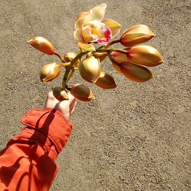 ガーデンミュージック、開花中♪