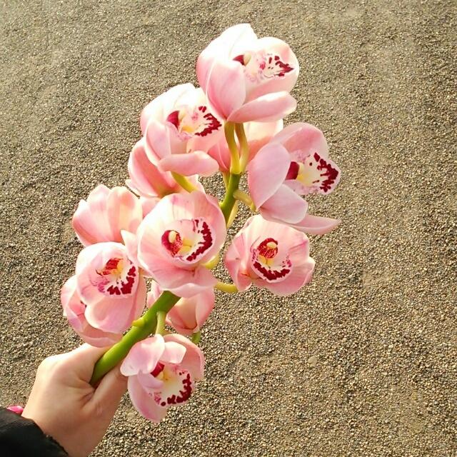 春駒、開花中♪