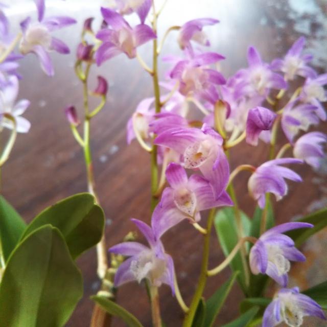ベニヅル、開花♪