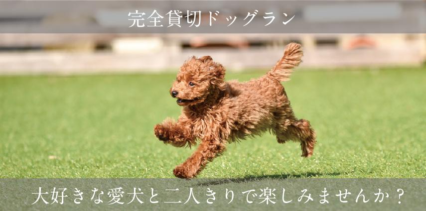 完全貸切ドッグランOPEN!愛犬と過ごす時間を楽しみませんか?