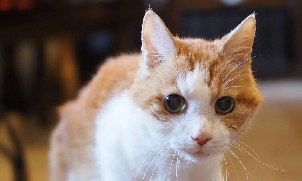 老猫ムーチョ逝く