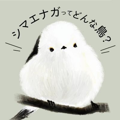 ●シマエナガってどんな鳥?