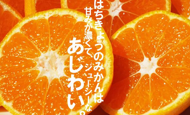 産地直送! 愛媛・西宇和で味わうおいしさをそのままお届け!