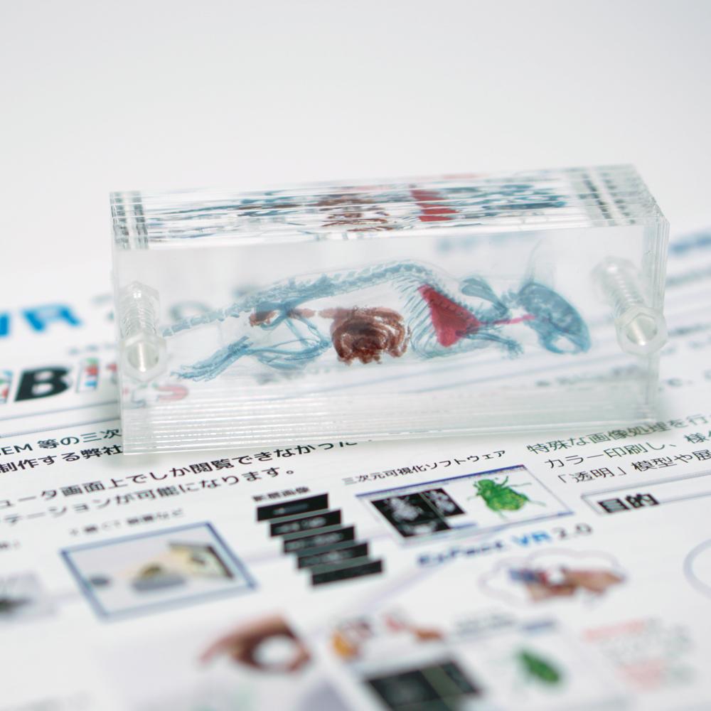 【新商品】マウス(ネジ)の詳細