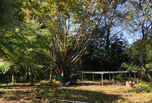 僕らが建てる森の小屋