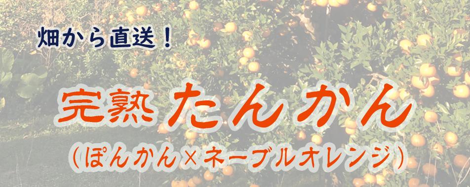 ◆◆ 商品  3 ◆◆ 南国果実 あま~い『完熟 たんかん』