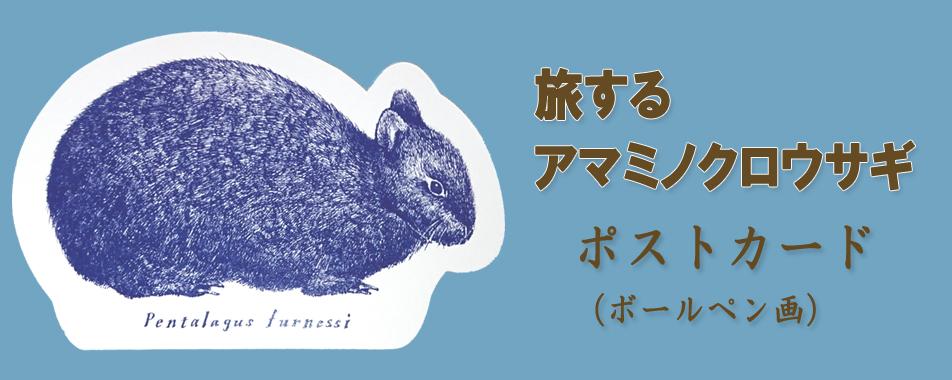 ボールペン画『アマミノクロウサギ』 絵葉書