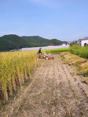 カルナローリ収穫!