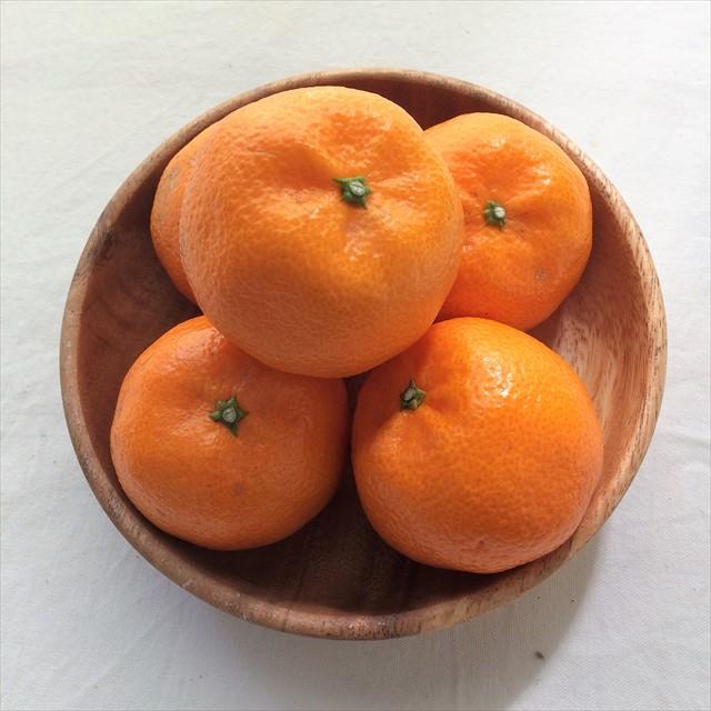 愛媛県岩城島の新高品質柑橘「たまみ」数量限定で入荷します。