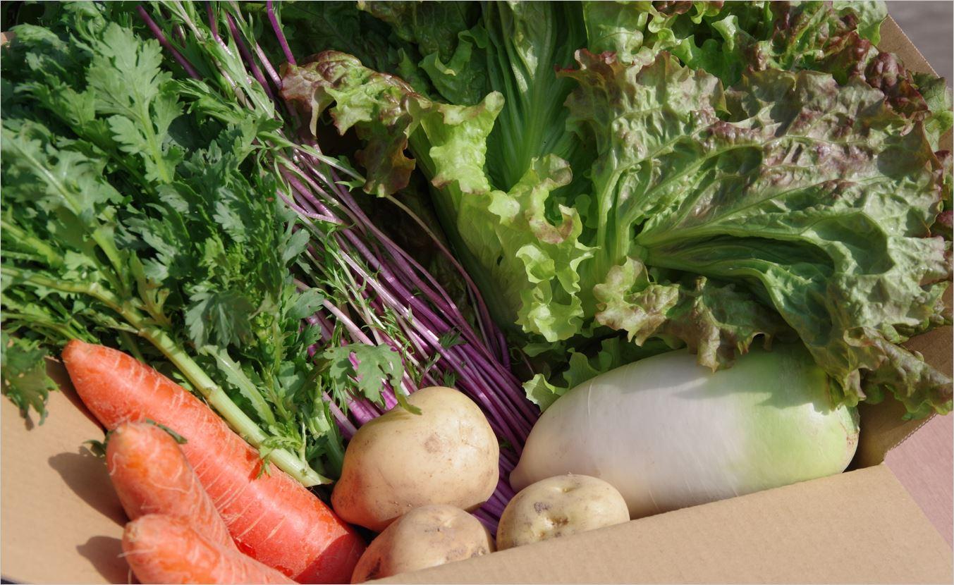お待たせしました!農場の冬野菜が新登場!