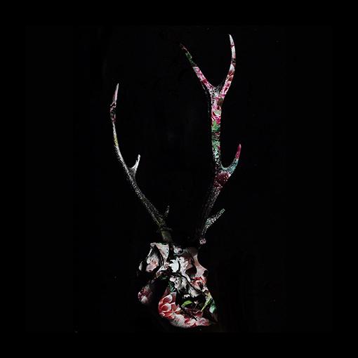 edalab.と鹿(蝦夷鹿、ヘラジカ、奈良の鹿)