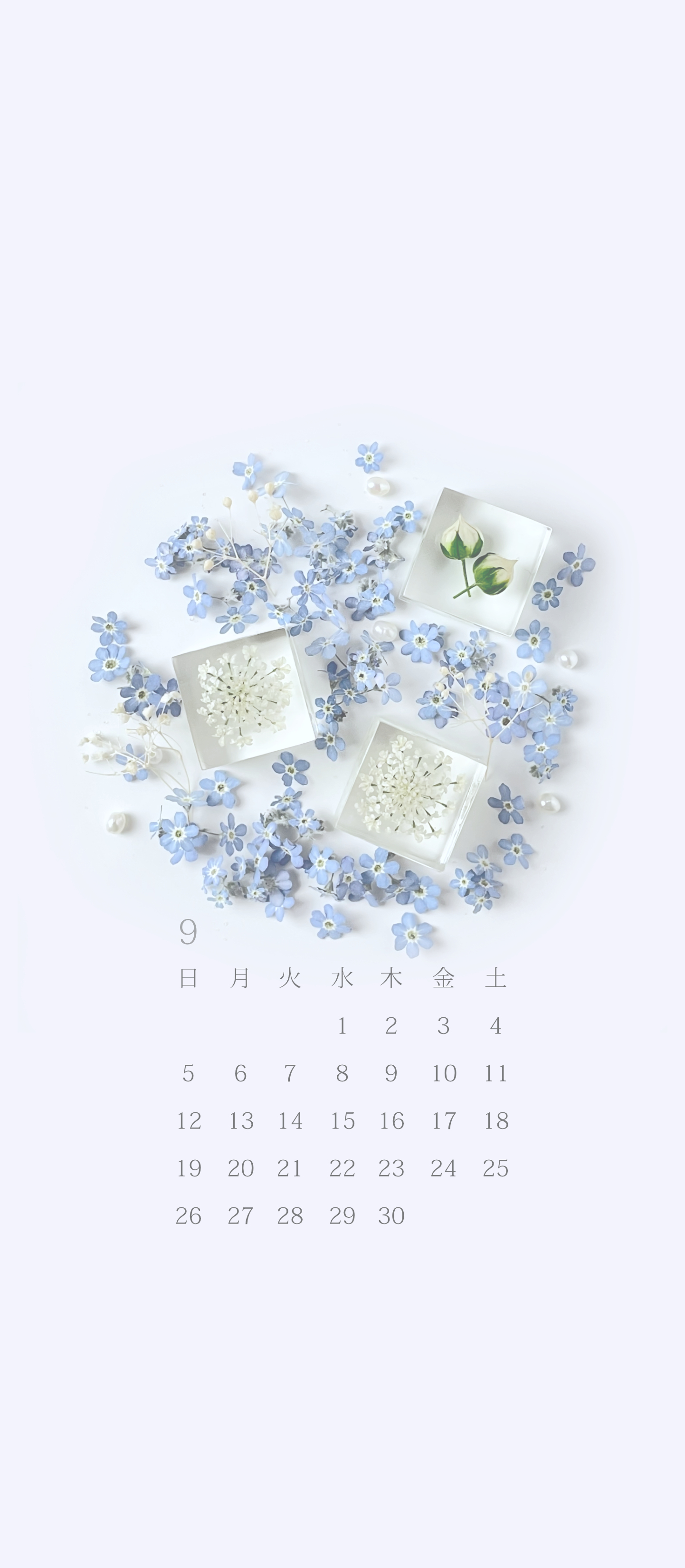 無料ロック画面カレンダー 「9月 碧天の勿忘草」