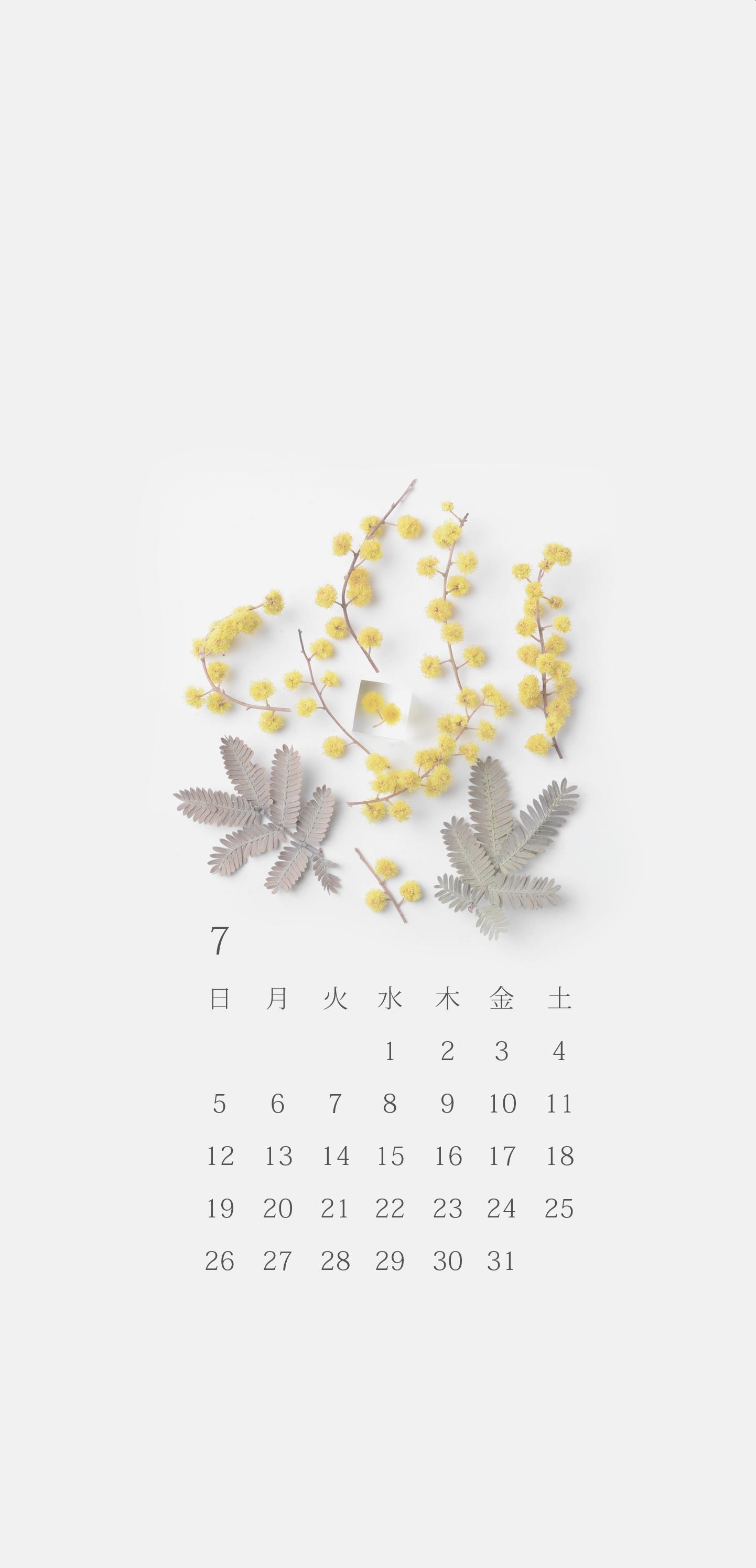 無料ロック画面カレンダー 「7月 ミモザ」