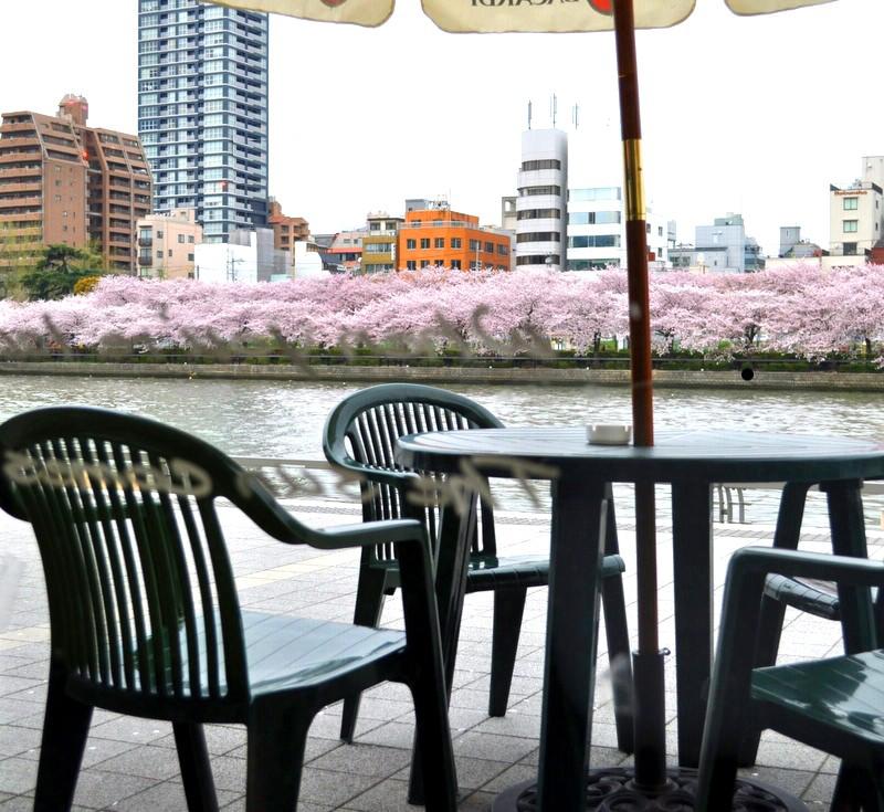 【自由飲酒党 総酔主催 桜を見る会 3/29】