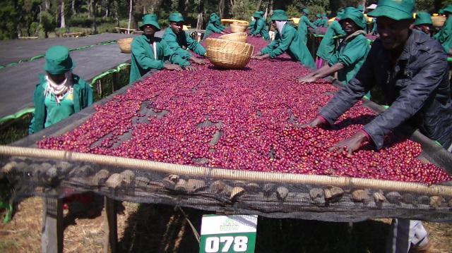 Ethiopia BUKU Sun-dried & My Story