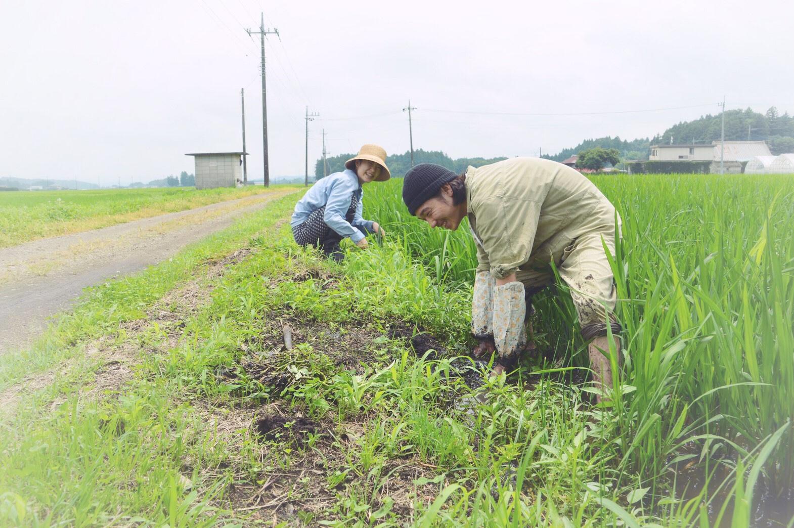 週末ファームステイ夏・生産者農家さんへ草取りのお手伝いへ行きました!
