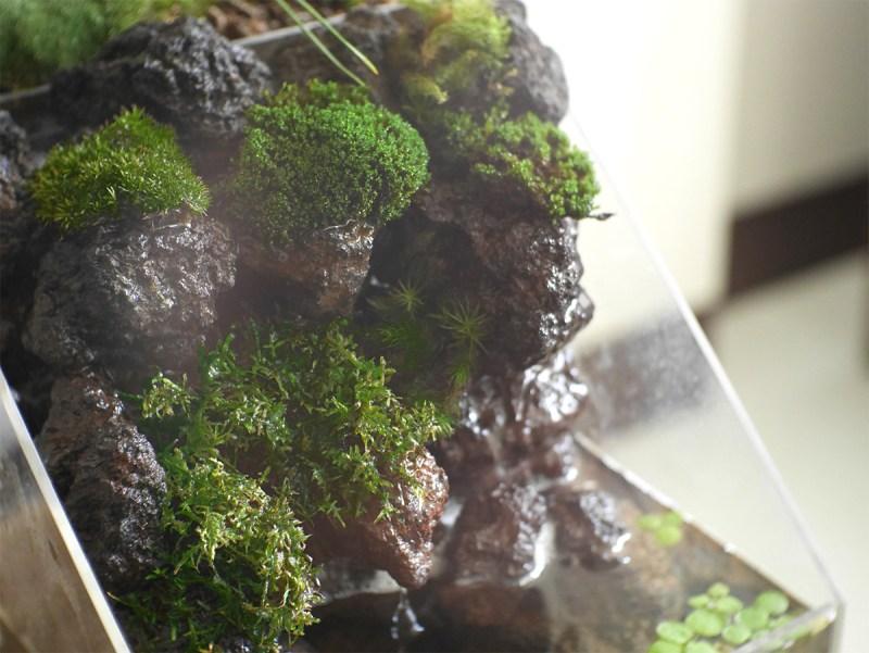 苔の奥深さが盆水に見事にマッチ