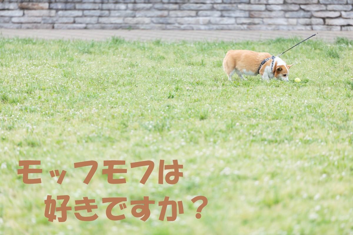 ★新作★ シュナウザー好きさん必見!