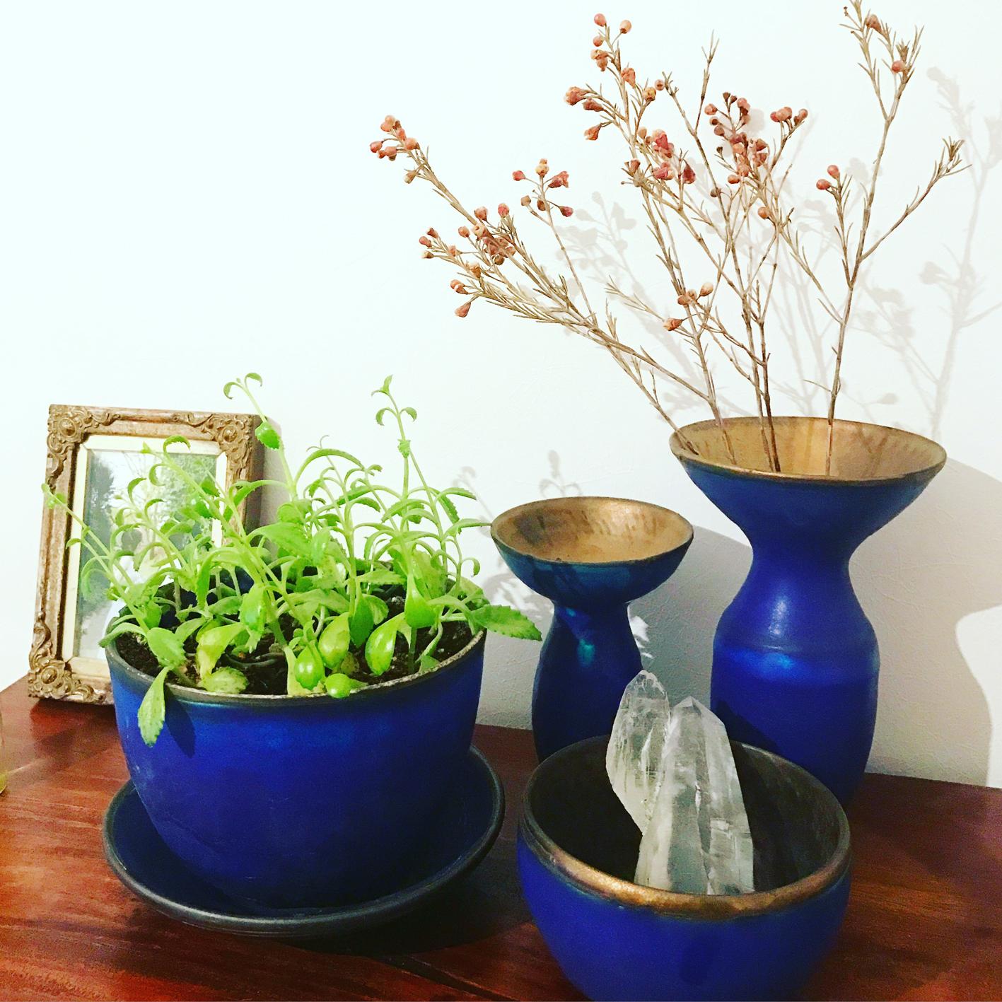 花のある暮らし 植物のある暮らし