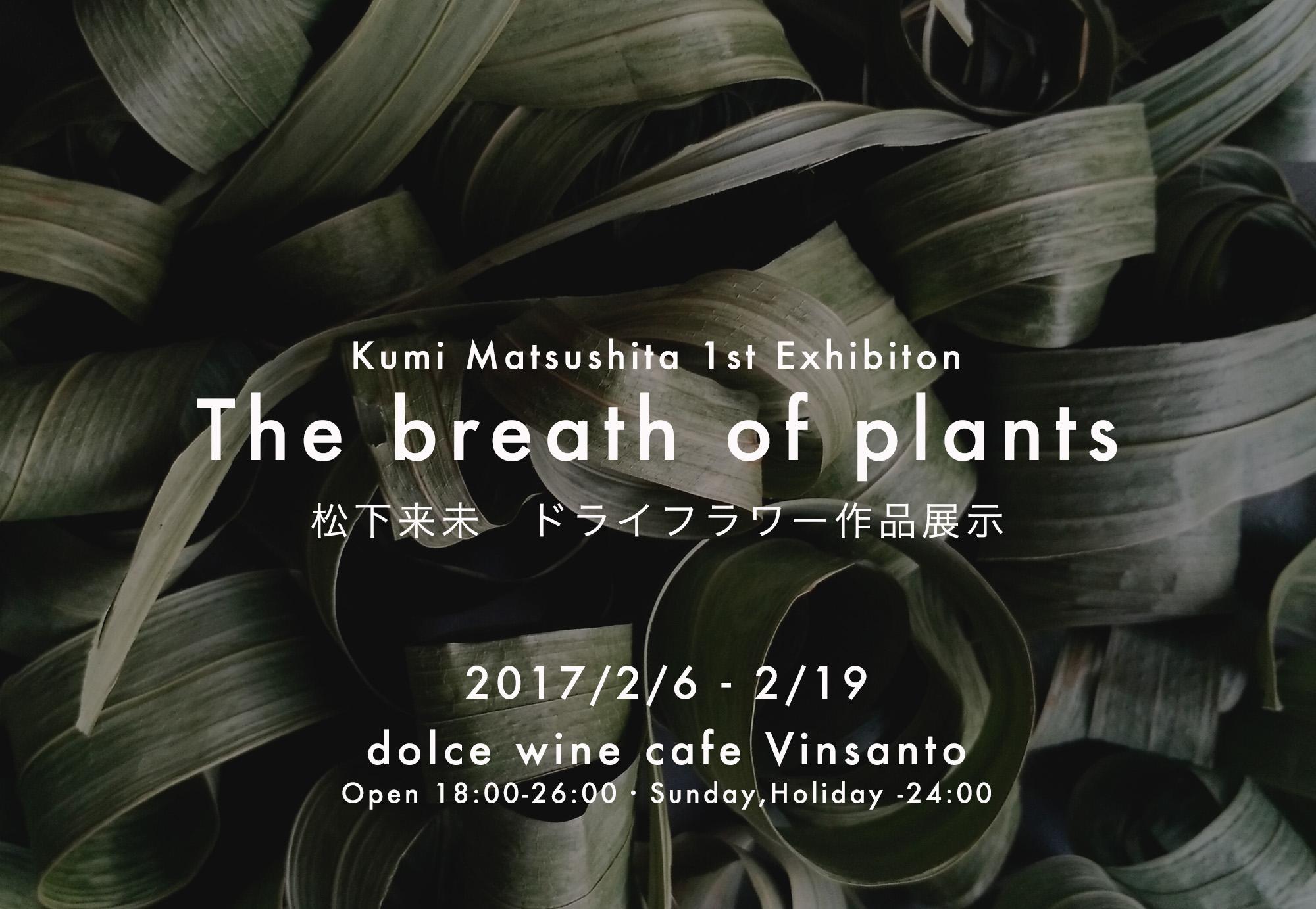 個展「The breath of plants」のお知らせ