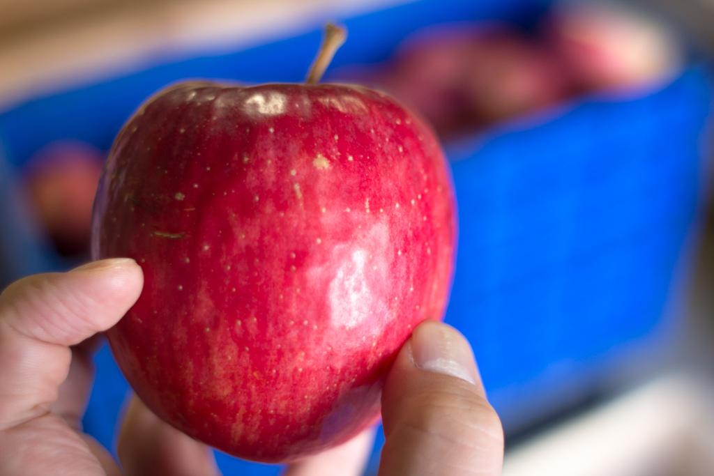 いぼり?男りんご?農家直伝!おいしいリンゴを見分ける方法