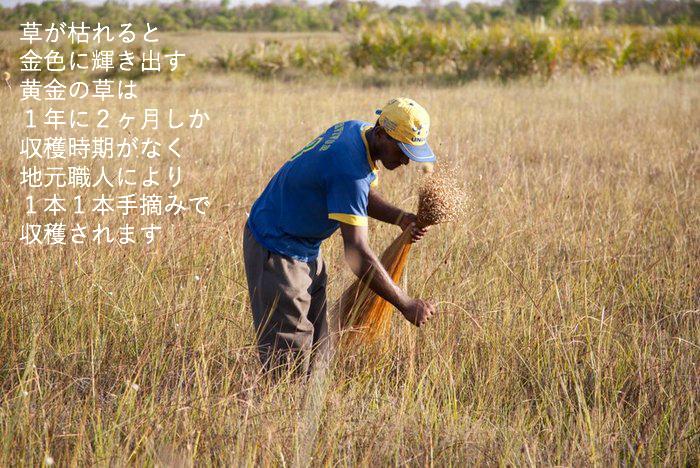 毎年9月20日の収穫解禁日から11月末の約2ヶ月だけが収穫期。とても大切な時期です。