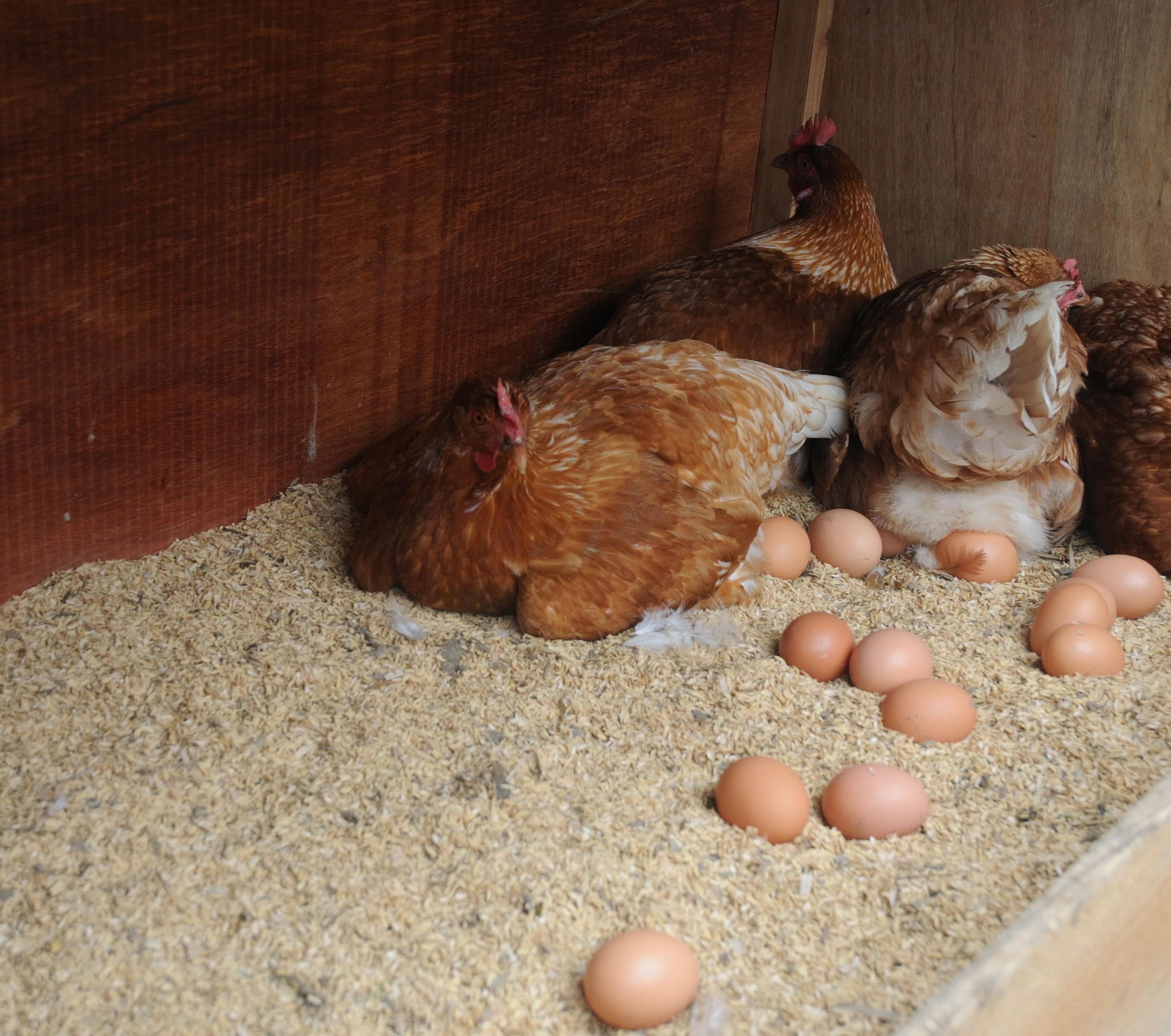 卵商品のチルド発送について