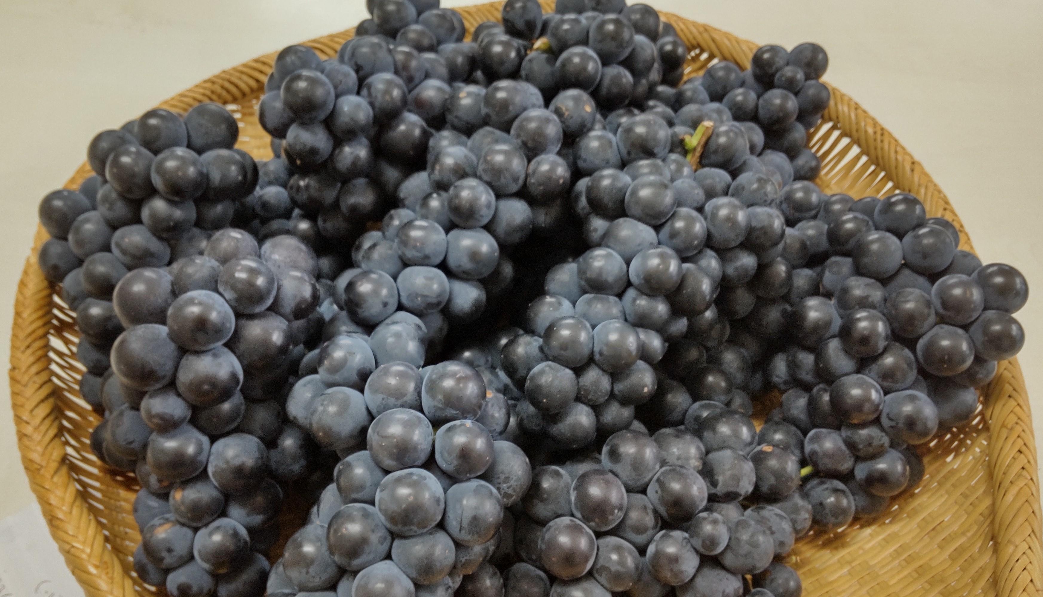 濃い味のブドウ、キャンベルのジャムはお早めに!