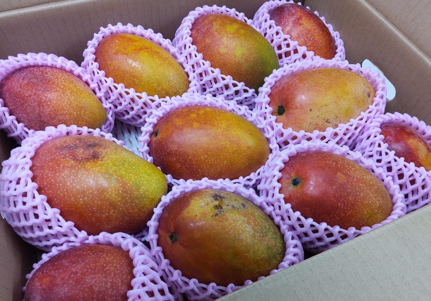 久米島産マンゴーが来ました