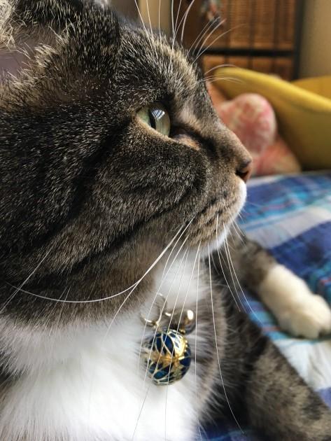 ネコさんの首輪を求めて。。