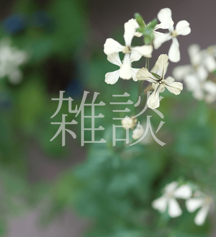雑談:ルッコラの花は風車のように