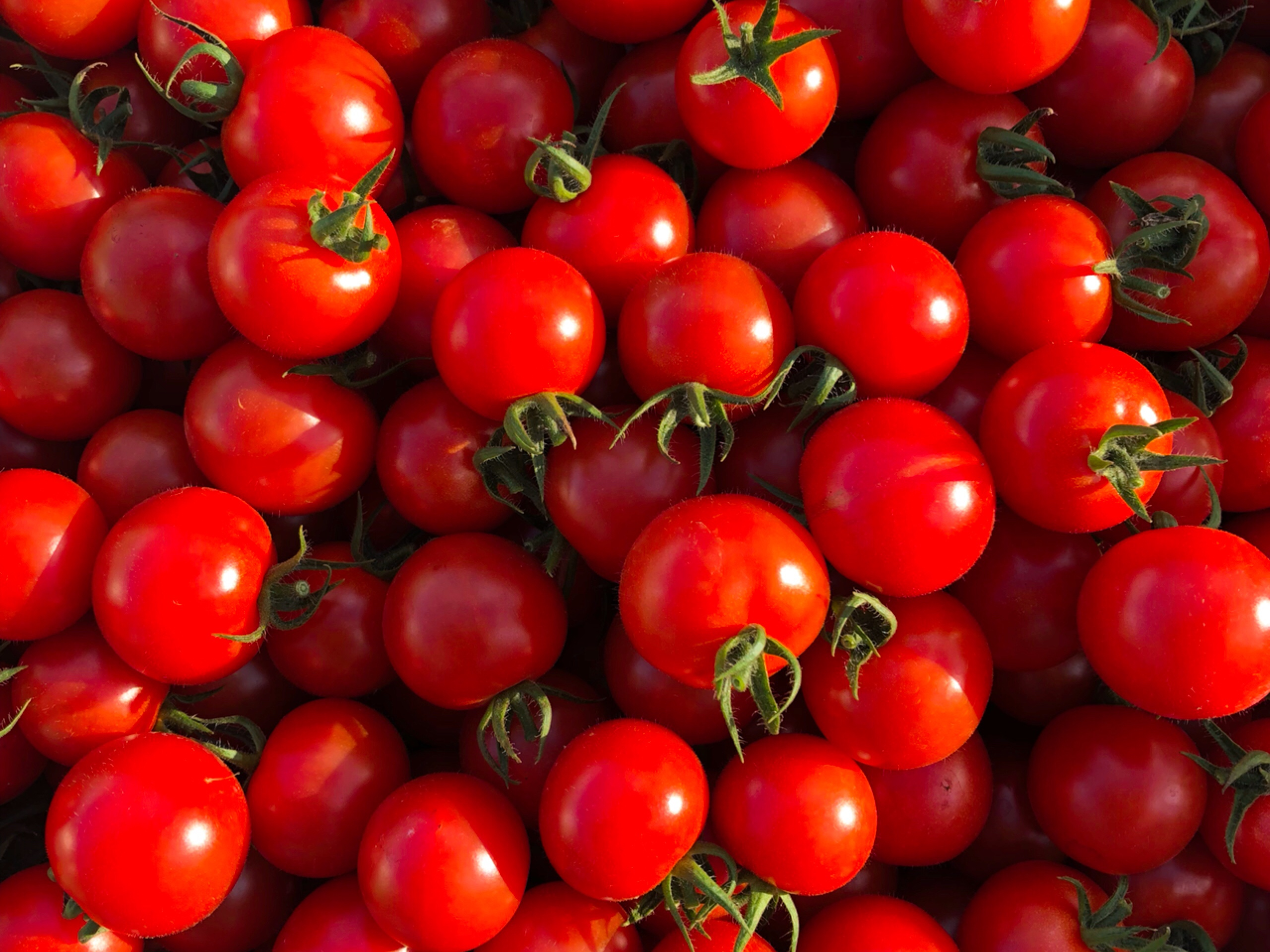 超トマトは植え替えのため、今期は6月5日(水)が最終販売日になります。
