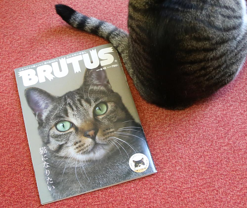 マガジンハウス「BRUTUS」に当店が掲載されました