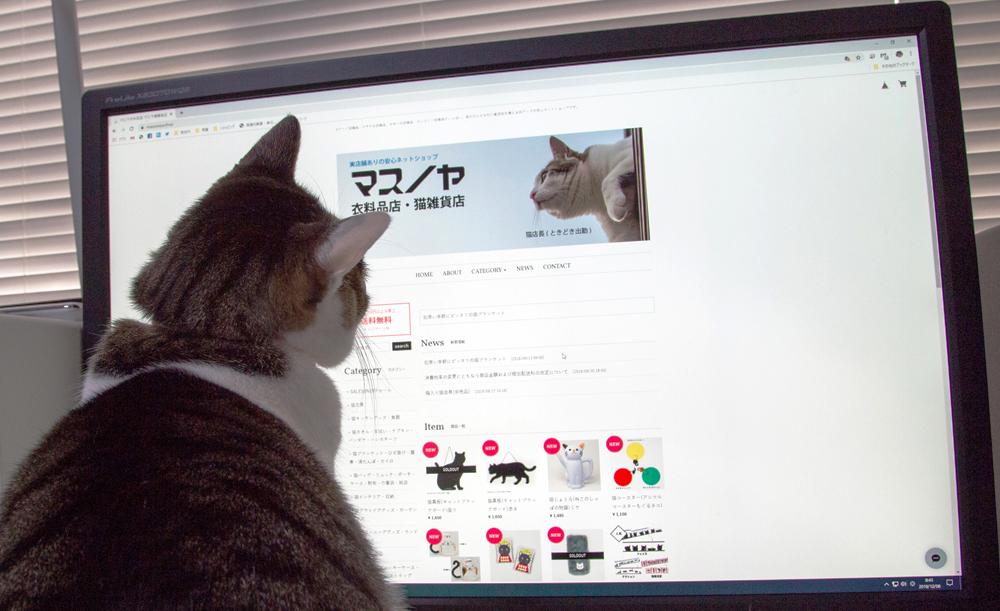 猫店長、パソコンにはまる。
