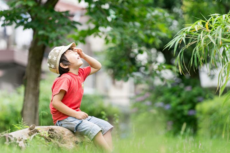 夏バテ防止にスーパーフード「モリンガ」で豊富な栄養素を手軽に。