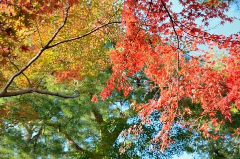 季節を楽しむ♪ かわいい愛しい『木の実リース』