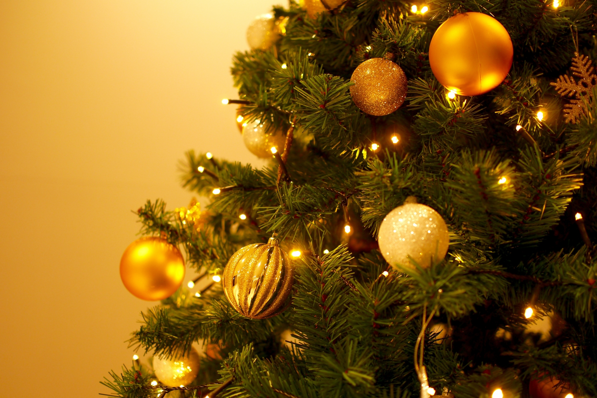 限定25本クリスマススペシャルバージョンVEGGI de PANは残りあと5本となりました。