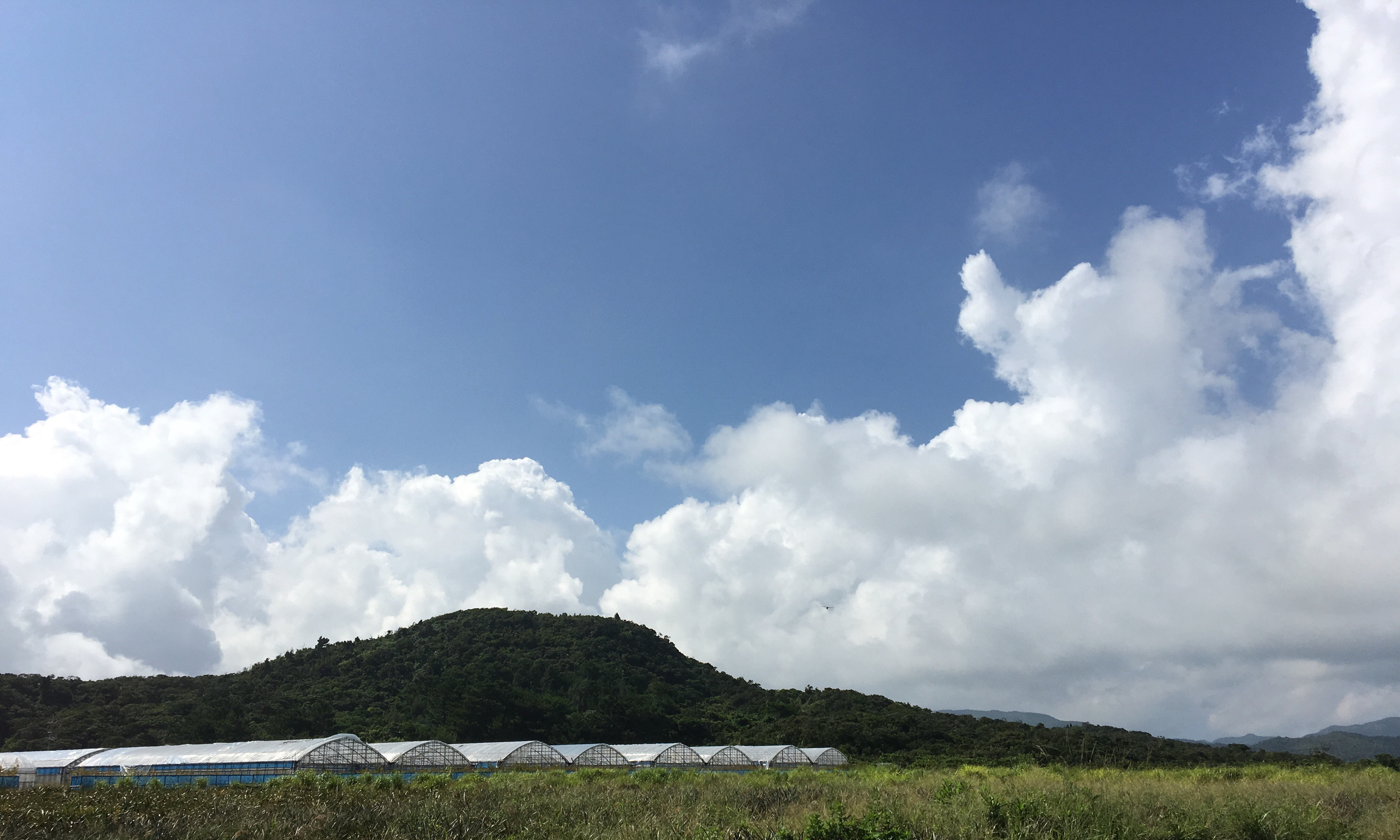 おはようございます。西表島のマンゴーハウスの一角でジャムを作っています。どうぞよろしくお願いします。