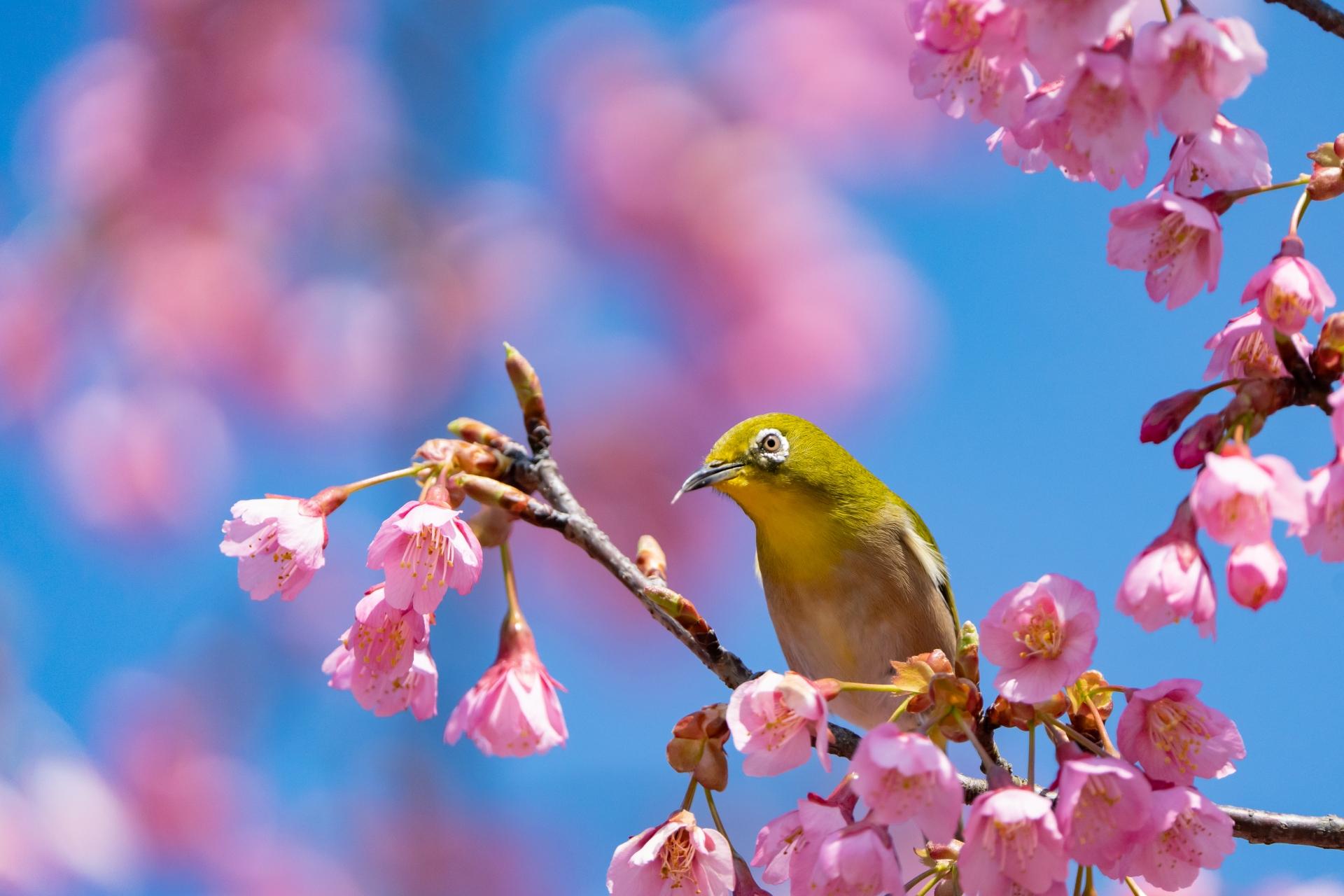 <長谷店日記>もうすぐ桜の季節ですね。