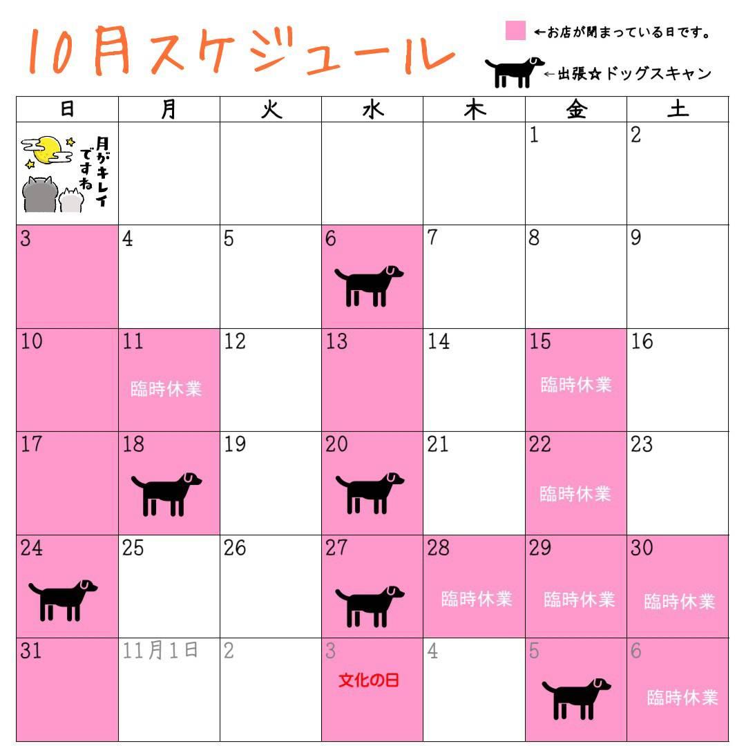 10月の予定♪