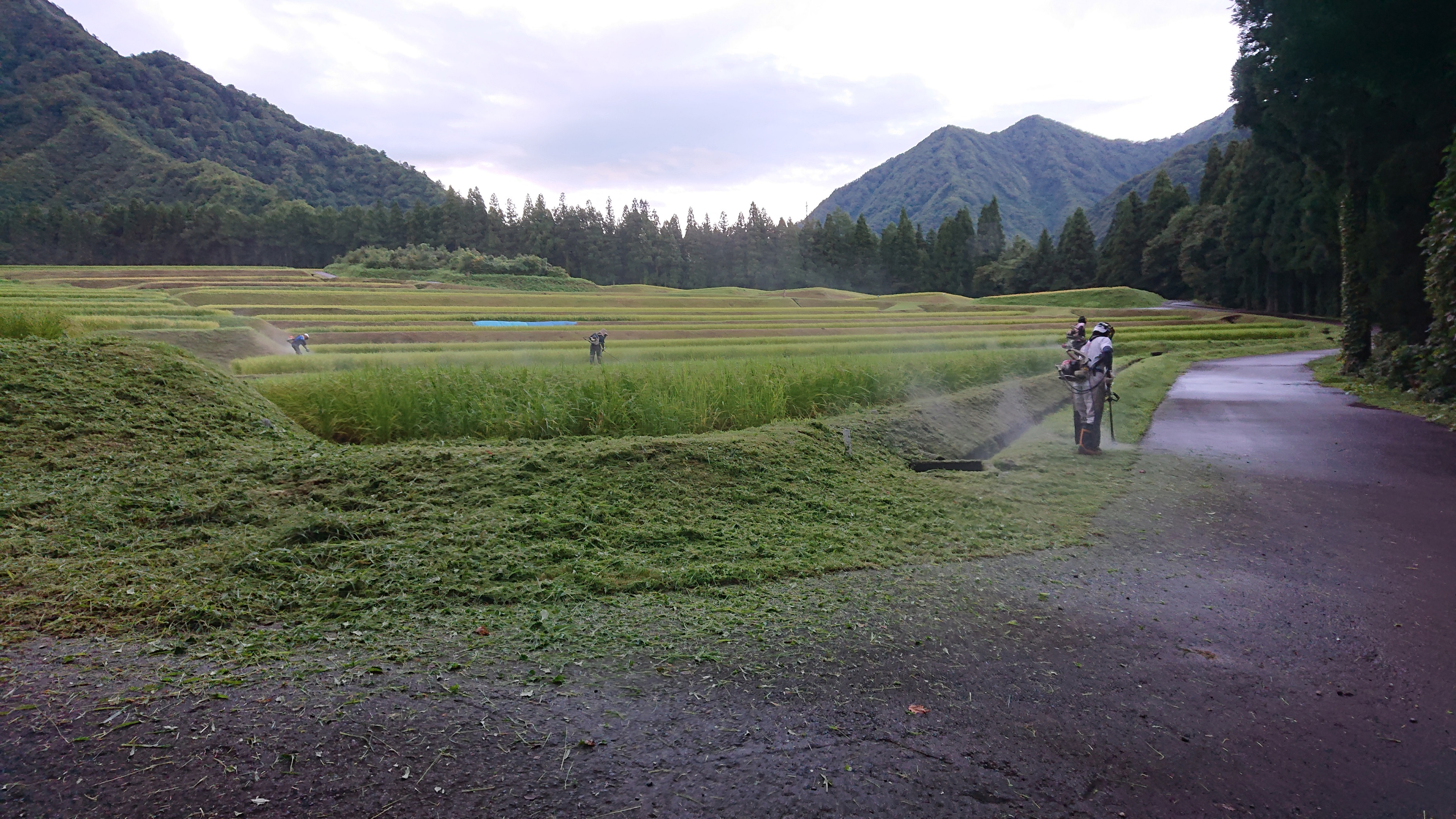 ~明日から稲刈り~