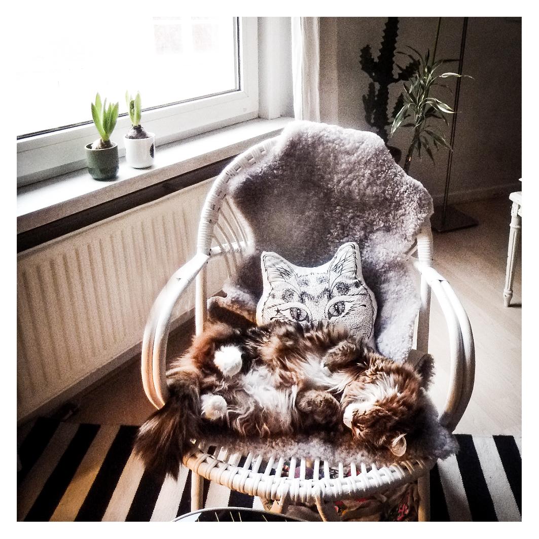 一目でとりこ♡ フランス生まれ、ネコのハニカミ笑顔のクッション。