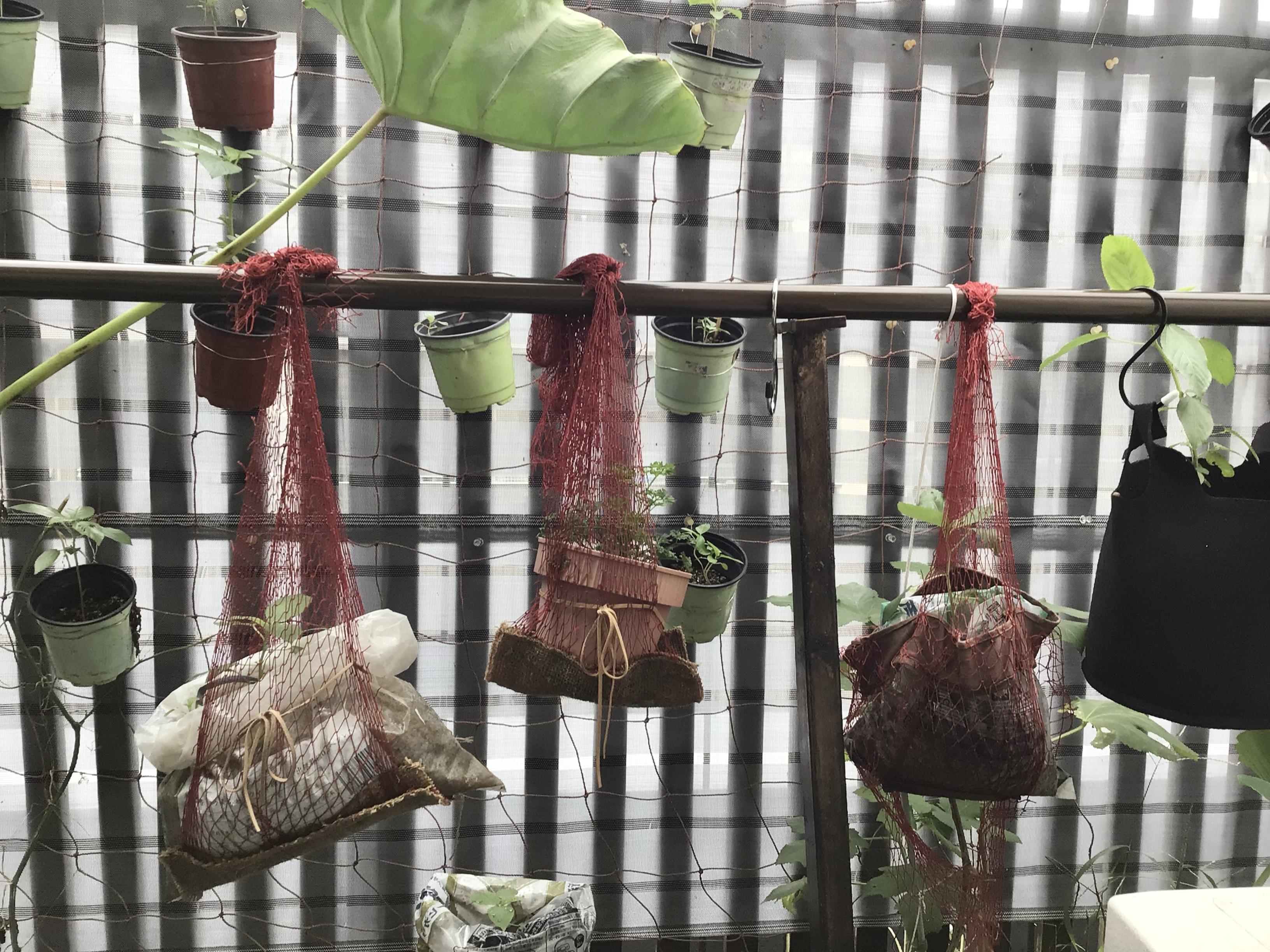 Sutenai planter holder