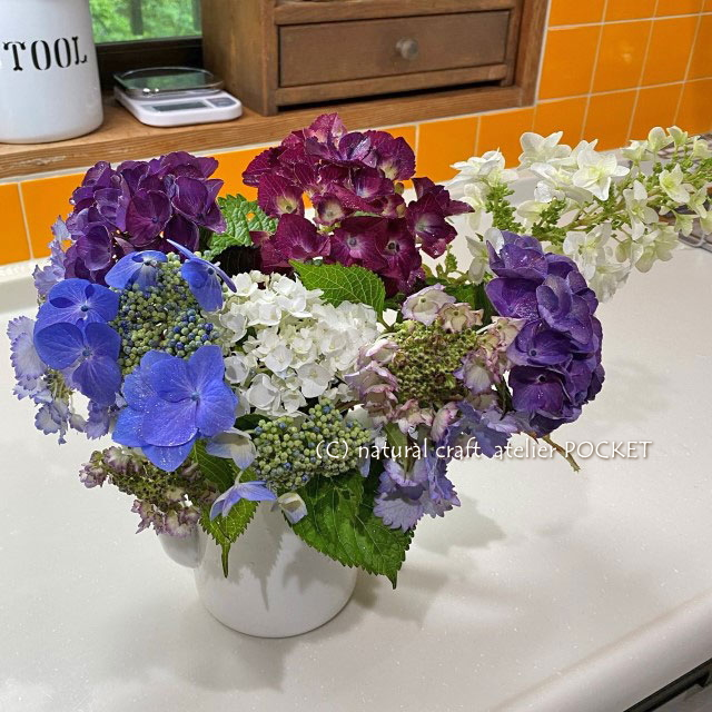 雨の日の紫陽花♪