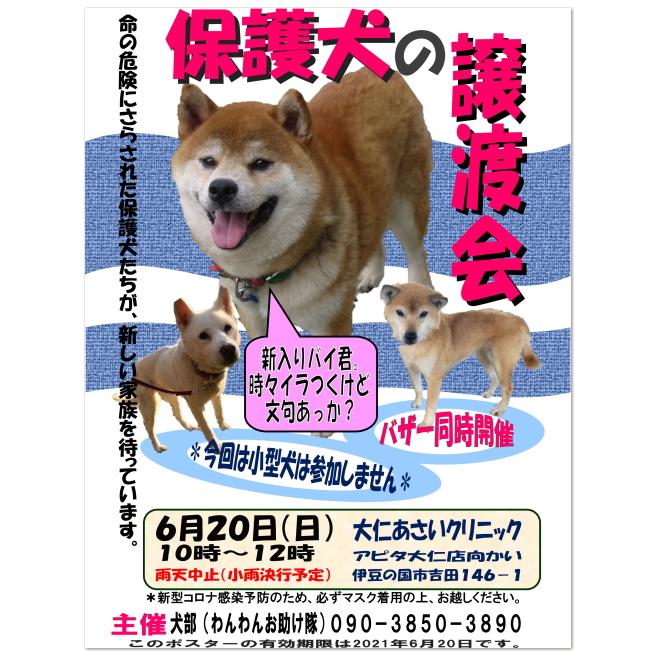 『6月の保護犬譲渡会』開催のお知らせ